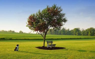 草地小清新自然风景桌面壁纸