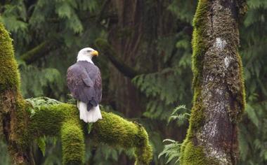 树干上觅食的老鹰高清壁纸下载