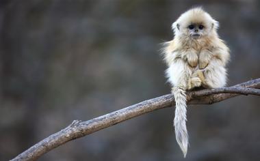 树技上的猴子高清壁纸