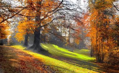 宁静的林间小道自然风景唯美壁纸