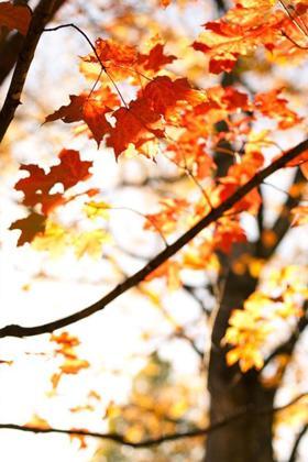 秋天唯美枫叶风景意境图片壁纸