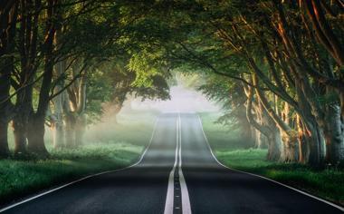 榕树路 薄雾 绿色森林自然风景公路壁纸