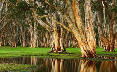 沼泽里的树林风景桌面壁纸