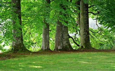 绿色树林高清风景桌面壁纸