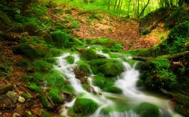 绿色盎然的护眼自然溪流风景桌面壁纸