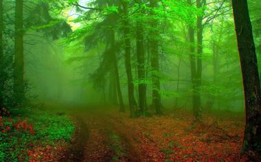 绿色森林深处护眼自然风景桌面壁纸