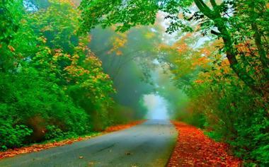 道路两旁美丽的自然风景桌面壁纸