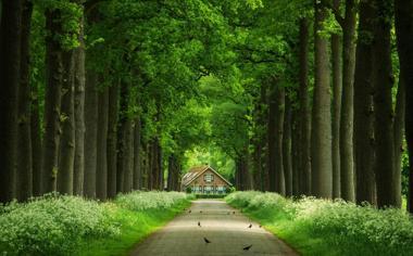 道路两边的绿色树林护眼自然风景桌面壁纸