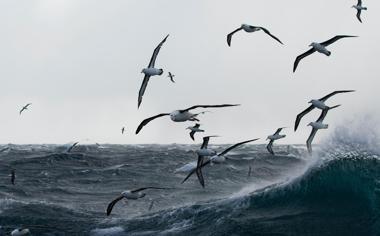 海面上飞翔的海鸥图片壁纸桌面