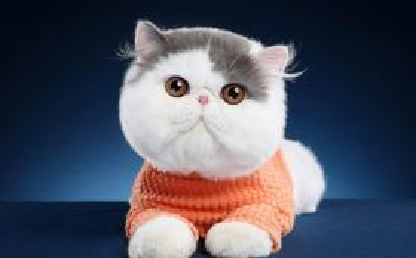 圆嘟嘟的大脸猫可爱猫咪图片壁纸